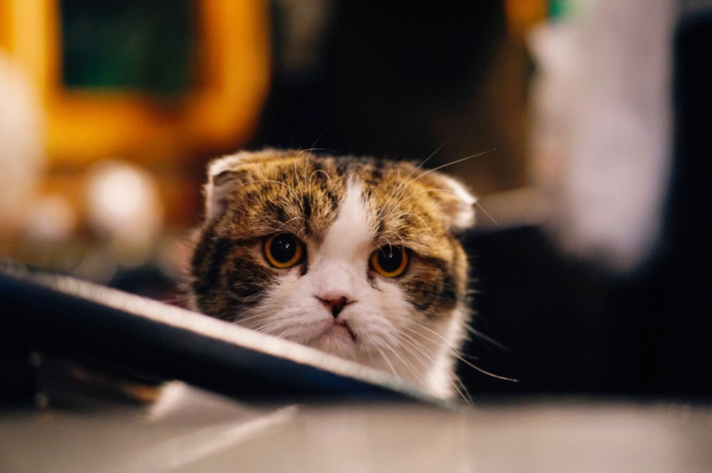 A cat that seems to be disappointed.