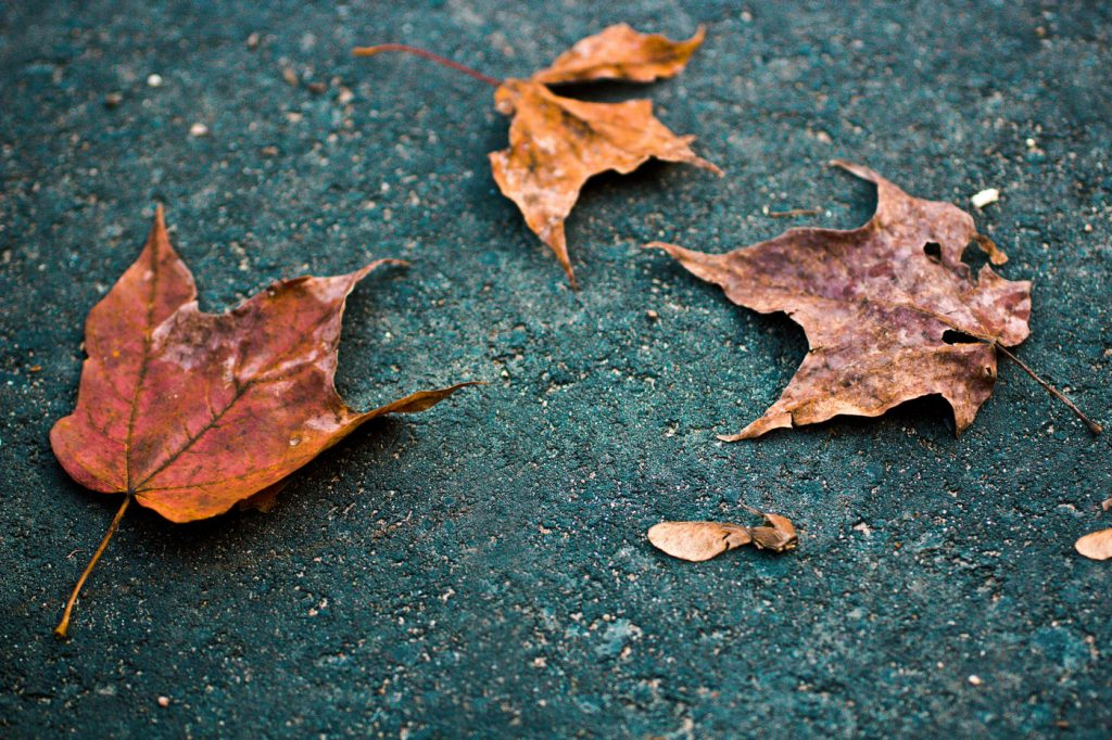 Dried, decaying leaves on the ground.