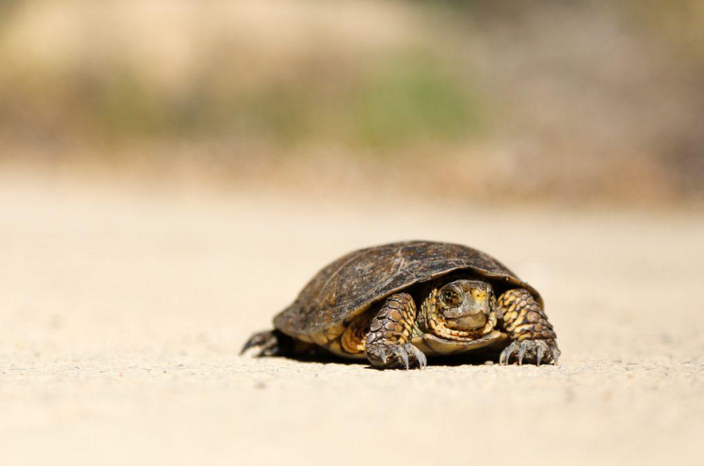 A tortoise on the sand.