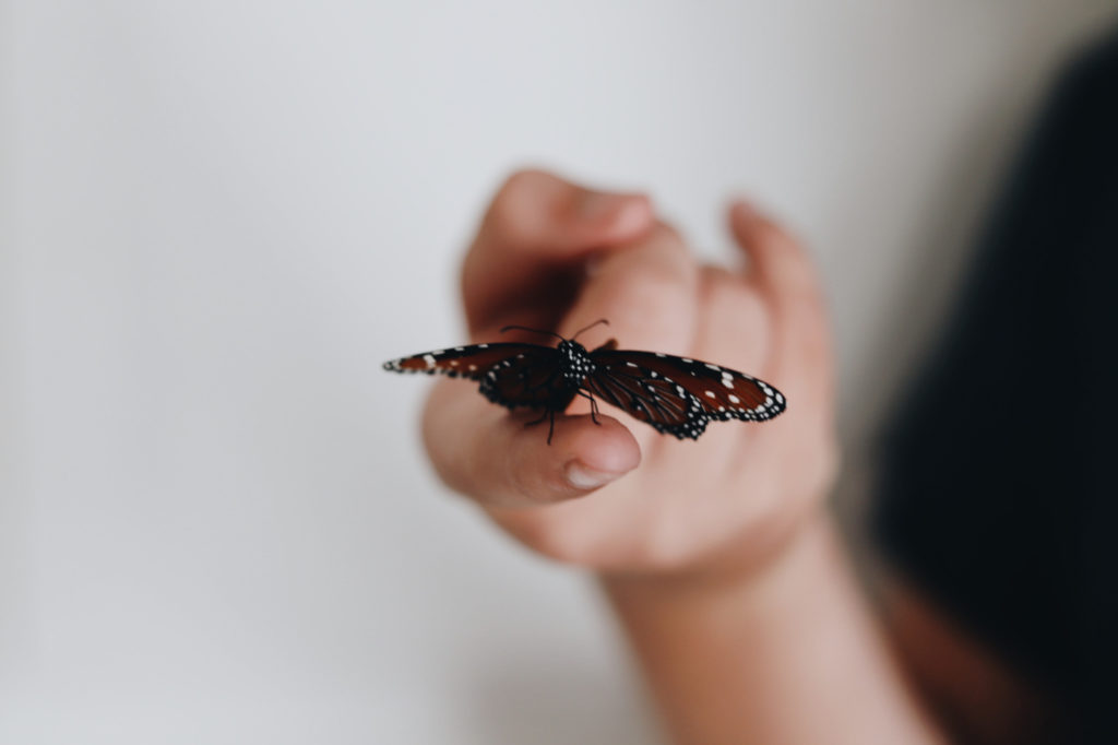 A person holding a butterfly in their hand.