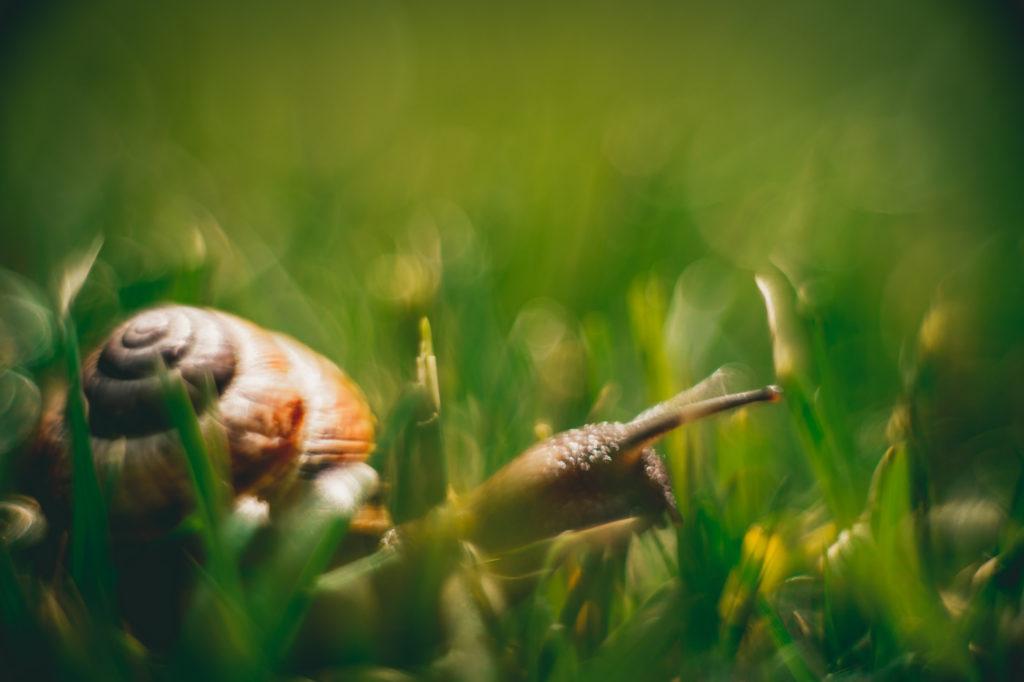 A snail in high grass.
