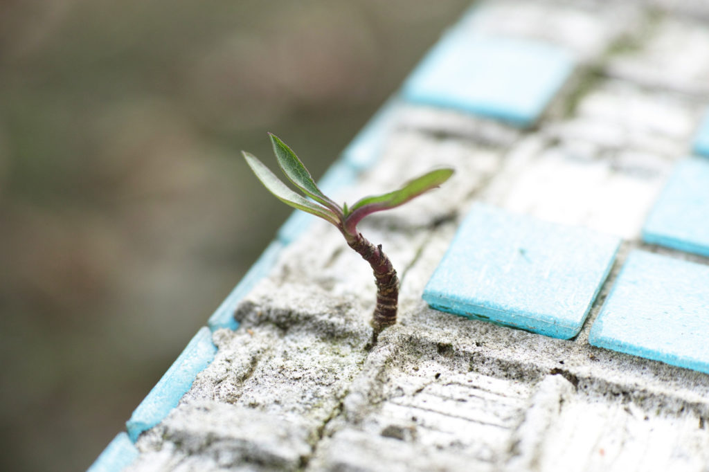 A plant growing out of concrete.