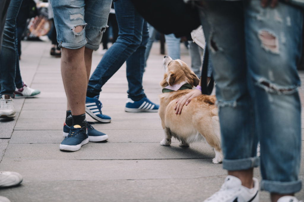 A person petting a dog among a crowd. Be kind. Not just because people always repay kindness with kindness, but because kindness multiples and eventually circles back to you in one form or another.